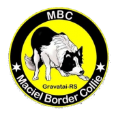 Maciel Border Collie